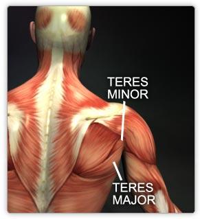 Teres Major