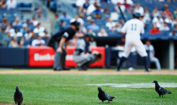 They need the rally pigeon back. (Al Bello/Getty)